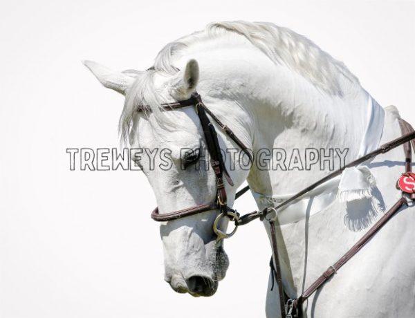 TBS-0029.jpg - Trewey's Photography