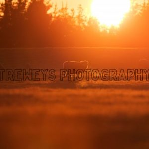 TBS-0040.jpg - Trewey's Photography
