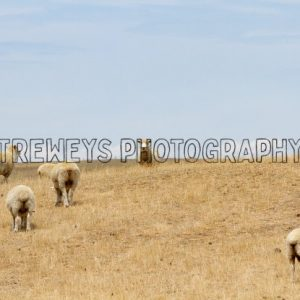 TBS-0067.jpg - Trewey's Photography