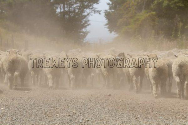TBS-0071.jpg - Trewey's Photography
