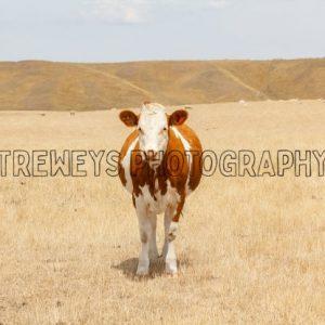 TBS-0075.jpg - Trewey's Photography