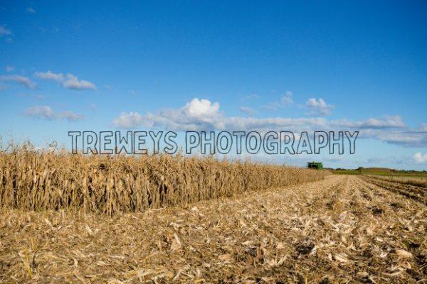 TBS-0188.jpg - Trewey's Photography