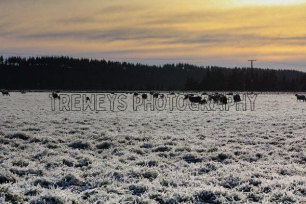 TBS-0343.jpg - Trewey's Photography