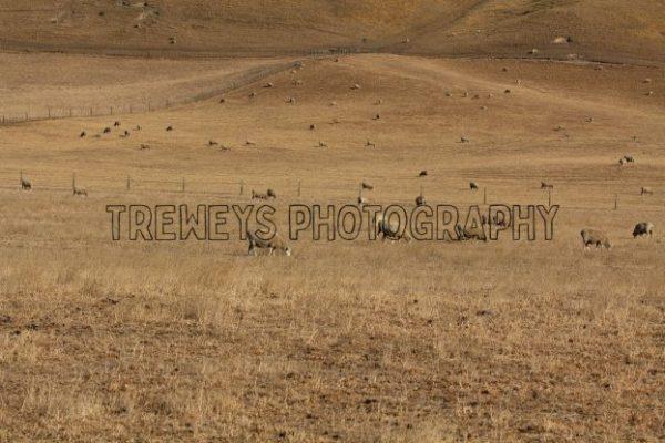 TBS-0364.jpg - Trewey's Photography