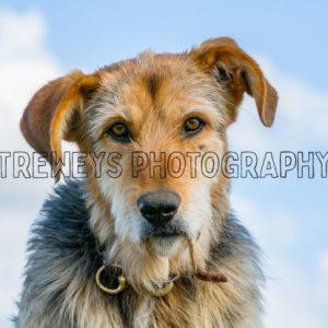 TBS-0365.jpg - Trewey's Photography