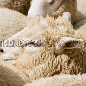 TBS-0391.jpg - Trewey's Photography
