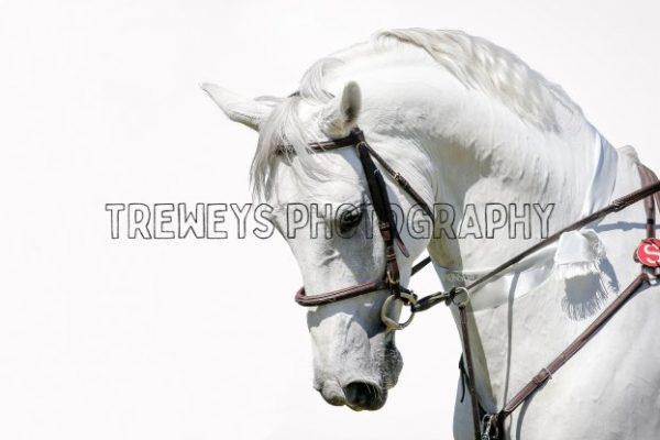 TBS-0396.jpg - Trewey's Photography