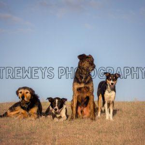 TBS-0405.jpg - Trewey's Photography