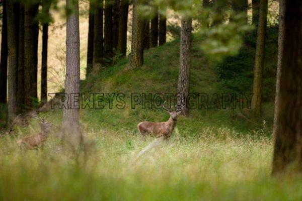 TBS-0417.jpg - Trewey's Photography