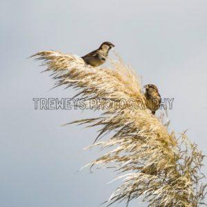 TBS-0430.jpg - Trewey's Photography
