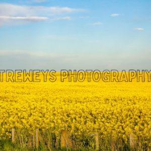 TBS-0489.jpg - Trewey's Photography