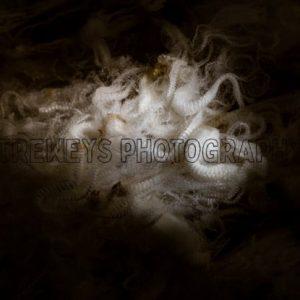 TBS-0528.jpg - Trewey's Photography
