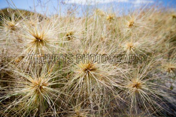 A44T0368.jpg - Trewey's Photography
